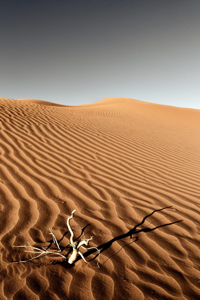 Ridules - Erg Lihoudi - Maroc