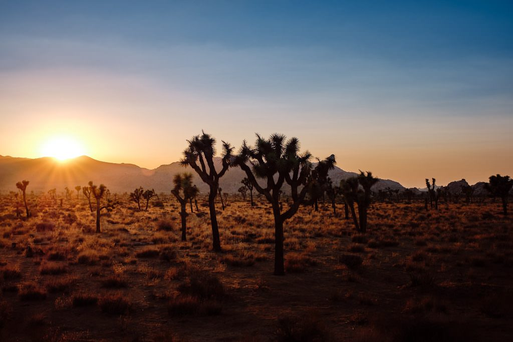 Sunset over Joshua Tree National Park, CA - USA