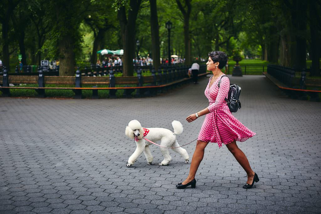 Lady in pink and her poodle in Central Park - New York - USA